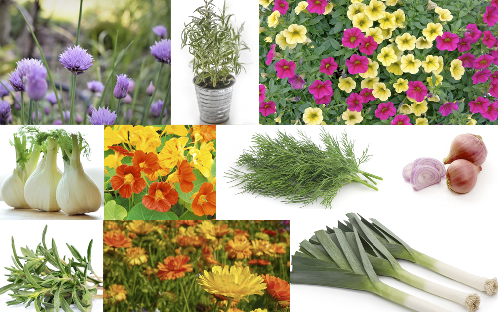 Plants That Keep Pesky Bugs Out Of Your Garden Rainscape