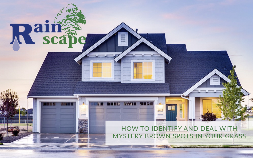 How to identify and deal with mystery brown spots in your grass