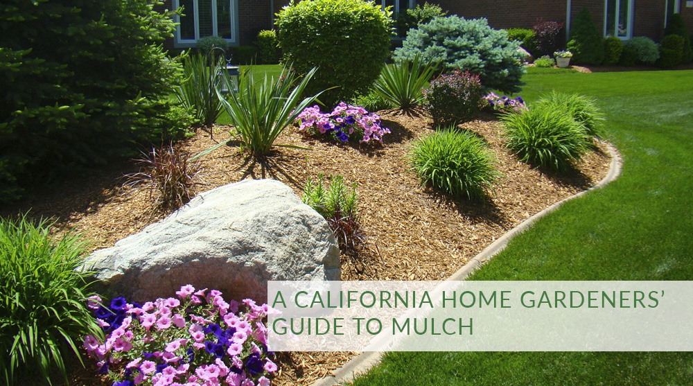 A California Home Gardeners Guide To Mulch Rainscape